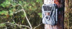 Fotopasce ako pomocníci, ochranári aj pre hobby